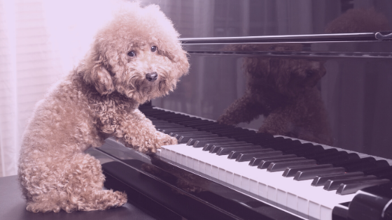 Where to Find Accompanists